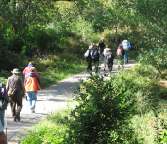 Walking in Killarney National Park